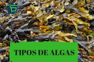 algas-comestibles
