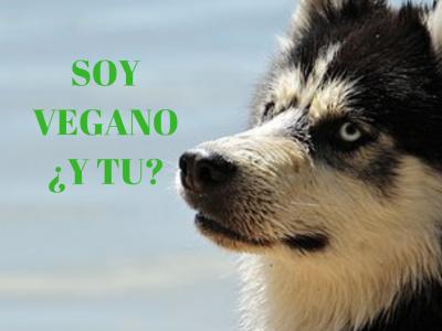 perro-vegan