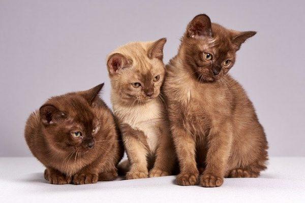 perfumar-gatos